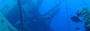 A fantastic dive site in Tenerife: Tabaiba and its wreck!