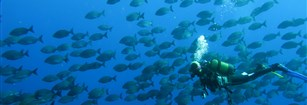 A special dive site in Tenerife: Abades and its volcanic reef