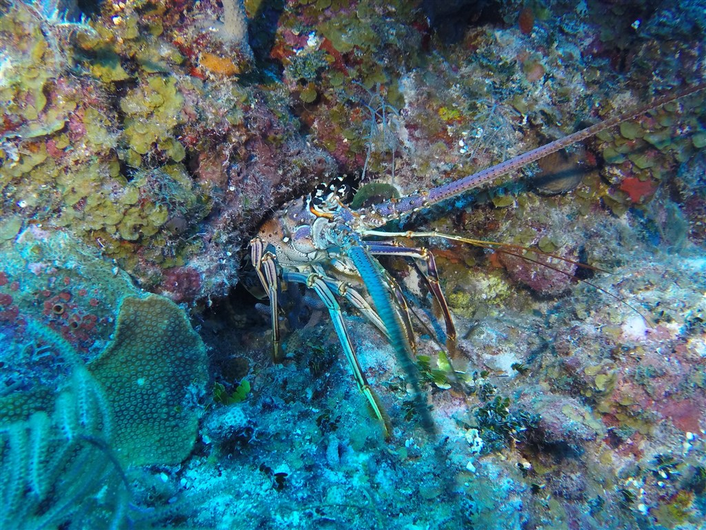Mia Toose's photo  in Turks and Caicos Islands