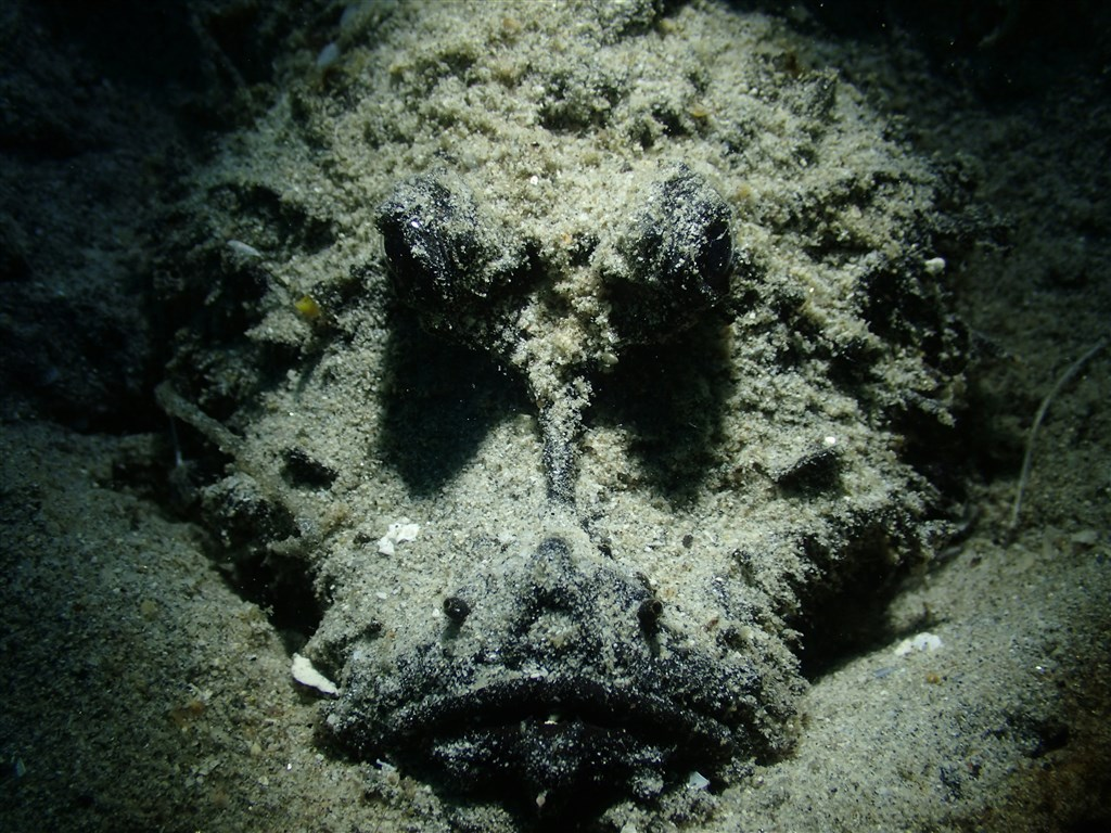 Bearded Ghoul Photo in Amigo House Reef in Malaysia