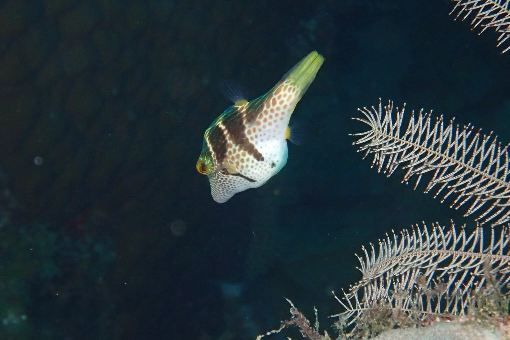 Phil's photo in Fesdhoo Wreck and Thila  in the Maldives