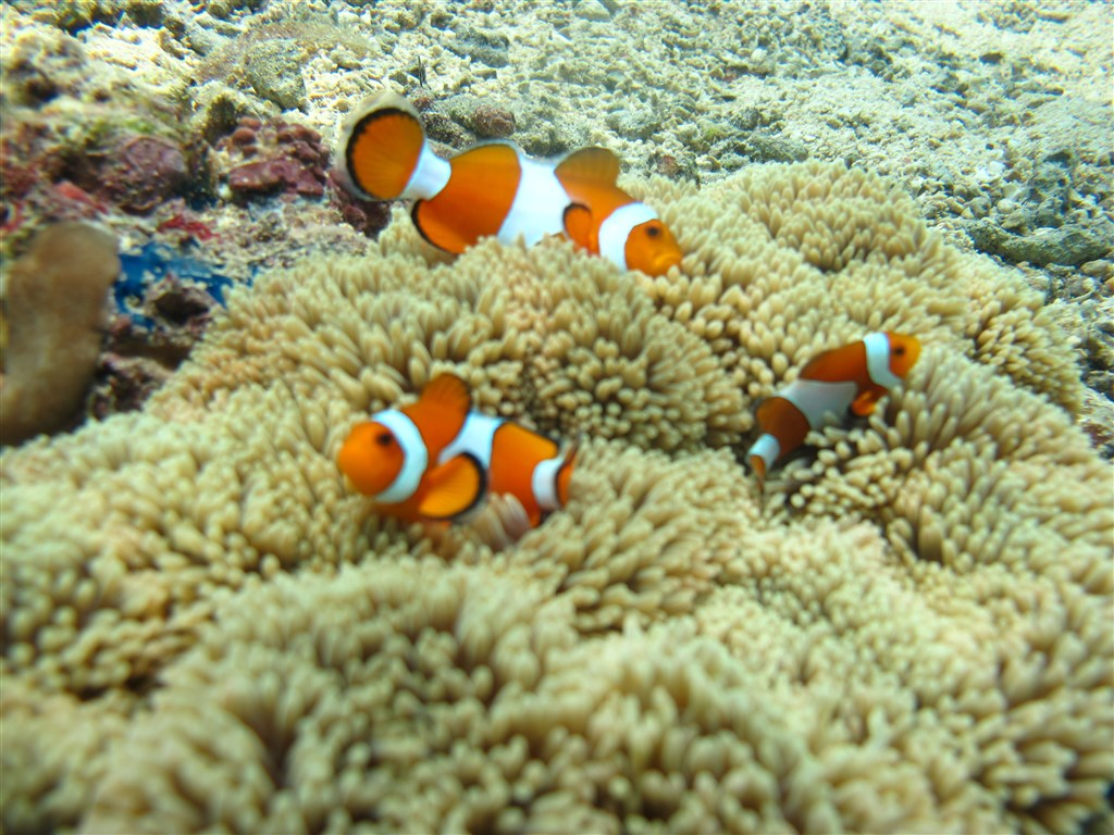 Scuba Diving Photo in Siete Picados in Philippines