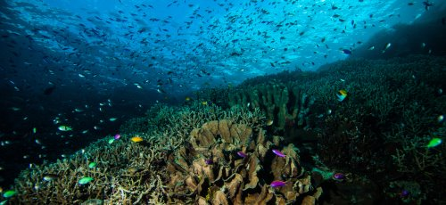Coral reef in Bunaken