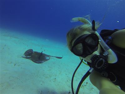 Southern stingray in Turks and Caicos Islands