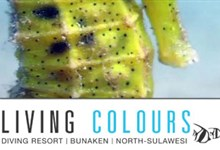 Living Colours Dive center