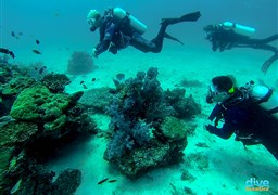 Scuba diving in Philippines