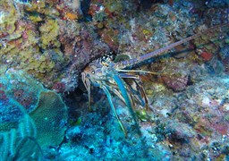 Scuba diving in Turks and Caicos Islands