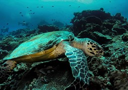 Scuba diving in Balicasag Island in Philippines
