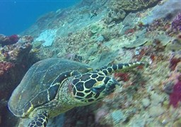 Scuba diving in Crystal Bay in Indonesia