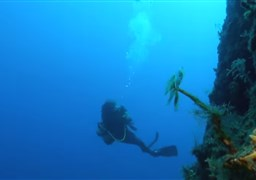 Scuba diving in Deep wall Therasia in Greece