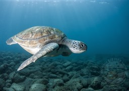 Scuba diving in el Puertito - Turtle Bay in Spain