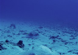 Scuba diving Laamu - Huvadhoo