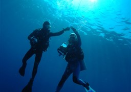Scuba diving in Hin Daeng in Thailand