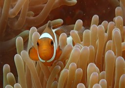 Scuba diving in Juara House Reef in Malaysia