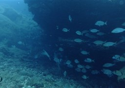 Scuba diving in Las Eras in Spain