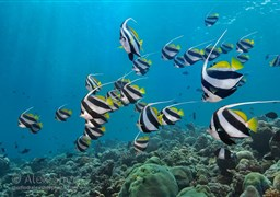 Scuba diving South and Central Atolls 10 nights