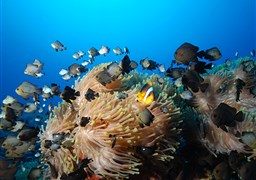 Scuba diving in Ras Mohammed in Egypt
