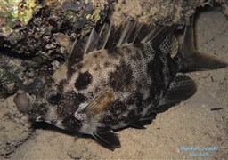 Scuba diving in Shaab Suedi Check Dive in Sudan