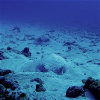 Filitheyo Thila Dive site