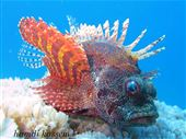Scuba diving photo by African Divers Nuweiba
