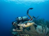 Scuba diving photo by Brandi Mueller