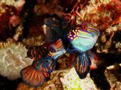 Scuba diving photo by Solitude Lembeh Resort