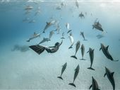 Scuba diving photo by Fisheyes