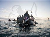 Scuba diving photo by Sedna Epic Expedition