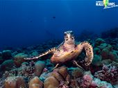 Scuba diving photo by M.ALLEDIVES host of MALDIVICA DIVERS