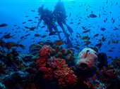 Scuba diving photo by Boutique Beach All Inclusive Diving - BB Dive