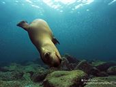Scuba diving photo by cabo shark dive