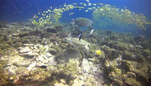 Scuba diving in Madivaru Beru in the Maldives